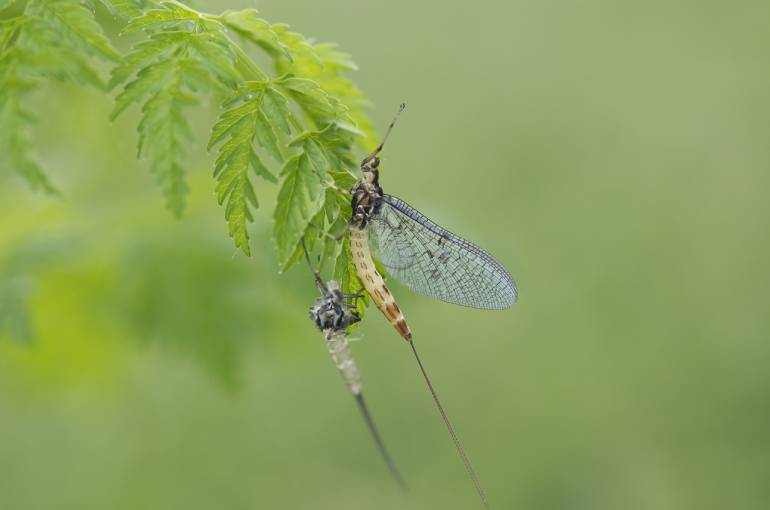 Flying Fishing: learn about the areas insects